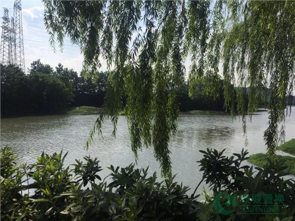 绿化景观图